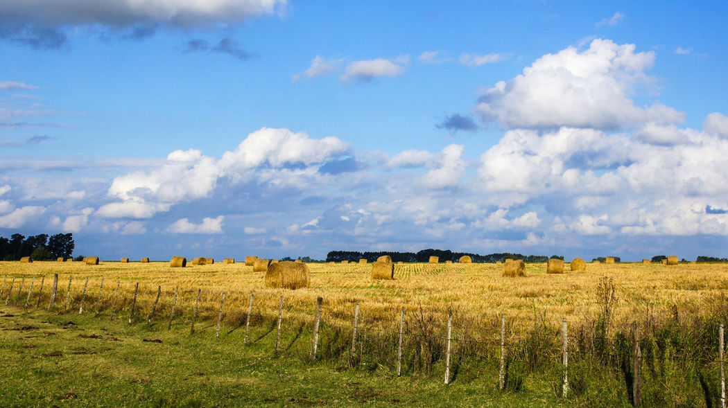 The Pampas, Argentina. Agriculture Beauty In Nature Cloud Cloud - Sky Countryside Crop  Cultivated Land Farm Field Grass Hay Bales Hay Stacks Horizon Over Land Idyllic Landscape Nature Non-urban Scene Outdoors Pampas Rural Scene Sky Tranquil Scene Tranquility Light Coulour Of Life