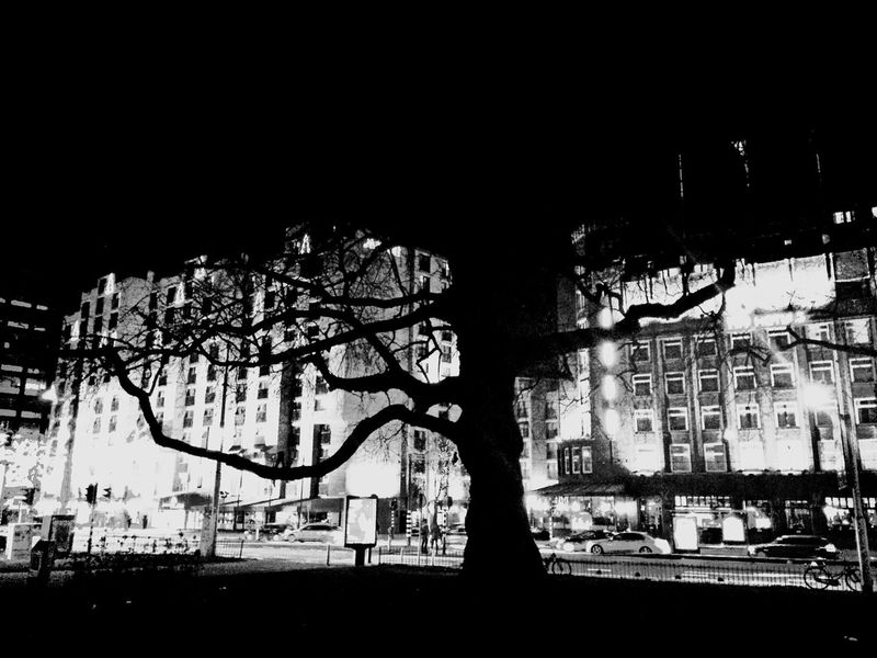 Black & White Black Light Amsterdam Building Hotels Three Big Tree No Leafs