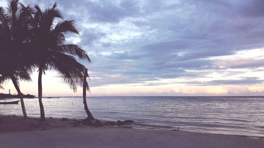 Tree Water Wave Sea Sunset Beach Sand Backgrounds Blue Beauty