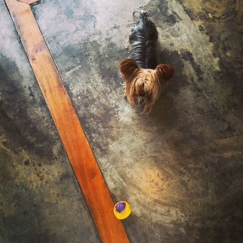 High angle view of dog standing on floor