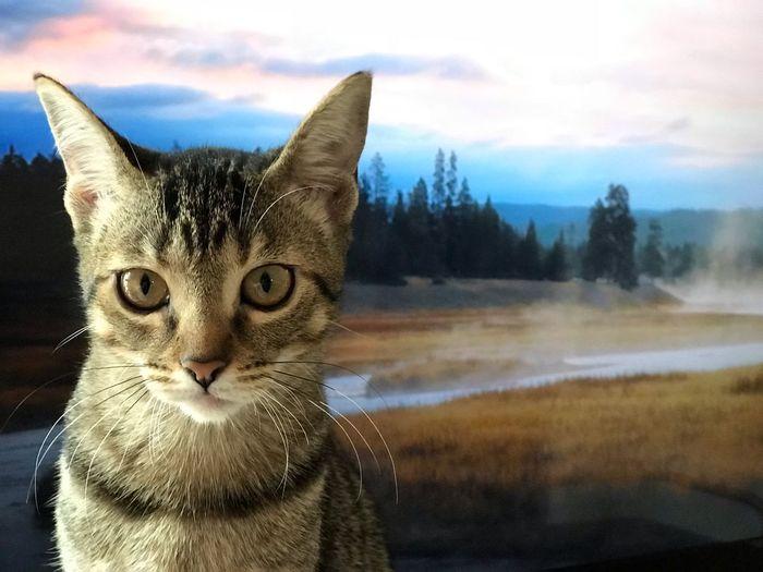 Kitten ahead