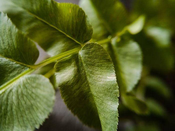 Ferns on a