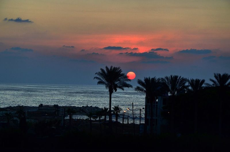 Palm Tree Sea Sunset Beauty In Nature Horizon Over Water Nature Orange Color