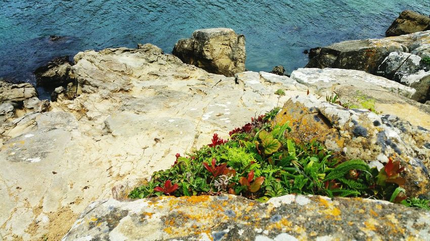 Red Wildflowers in sandstone cliffs & turquoise ocean Background Red Green Zen Wildflowers Copy Space Headland Sandstone Merging Converge Meditation Moment Timeless Turquoise Ripples Countryside EyeEm Selects Water Sea Beach Sand Sunlight Rock - Object High Angle View Textured  Close-up Rock Formation Calm Ocean Rugged