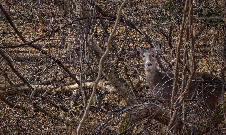 Tree Nature Outdoors Animals In The Wild Animal Themes Beauty In Nature Deer Deer Moments Animals Wild Wildlife & Nature Wildlife Nature_collection Woods Wilderness
