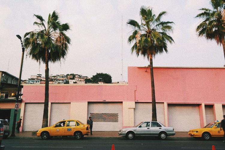 Guayaquil, Ecuador Eyem EyEmNewHere Eyem Week Pink Color Outdoors Ecuador Car Palm Tree Eyem Best Shots EyEm Selects Outdoors Photograpghy