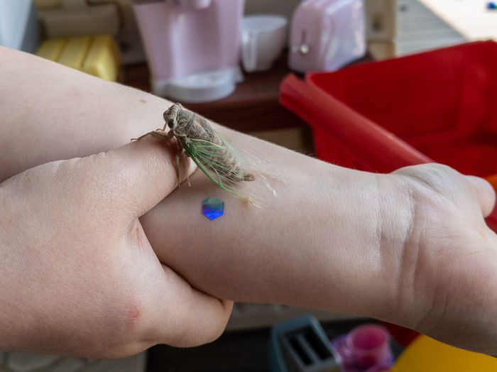 Close-up of human hand holding insect
