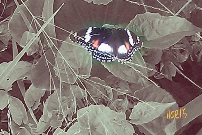if you Love her, let her Fly ... Nature_collection Getting Inspired