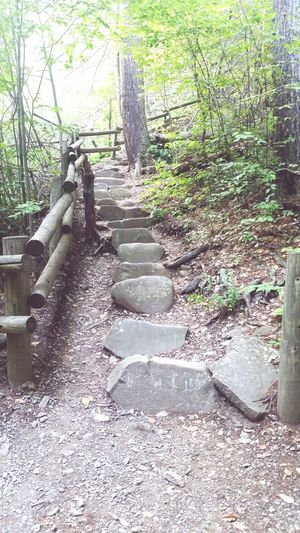 Up Or Down Nature Hike Stairs Beauty In Nature No People Poconos Buskill Pennsylvania Water Tree Trails Trees Forrest