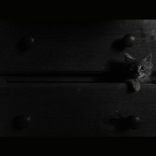 The First Look to the World Cat Rsa_mystery Ig_portrait Jj_mystery Jj_sombre Cute Bnw_igers Jj_allportraits Täby Kitten Blackandwhite