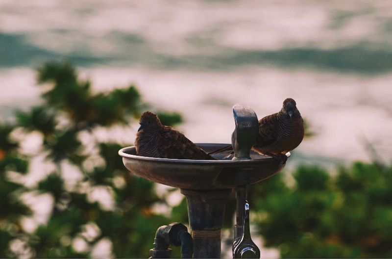 Close-up of birds perching on drinking fountain against sky