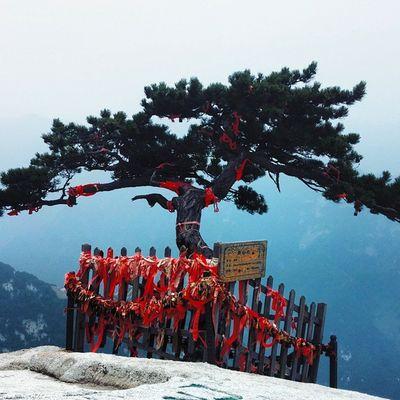 Grateful I got to hike around Mt. Huashan . The Lone Tree was stunning to see. China Travel 365grateful
