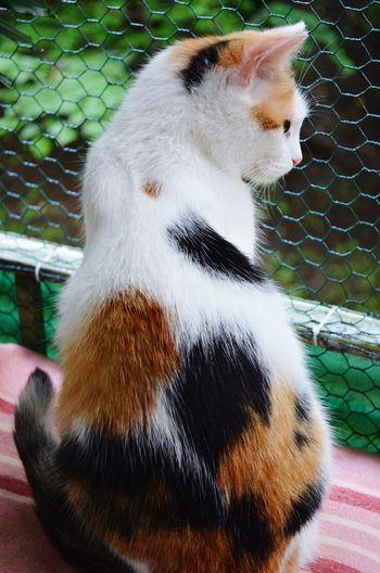 Cat Cats Cat♡ Catoftheday My Cat кошка Моя кошка яфотографтаксебе Nikon D5100  Соня