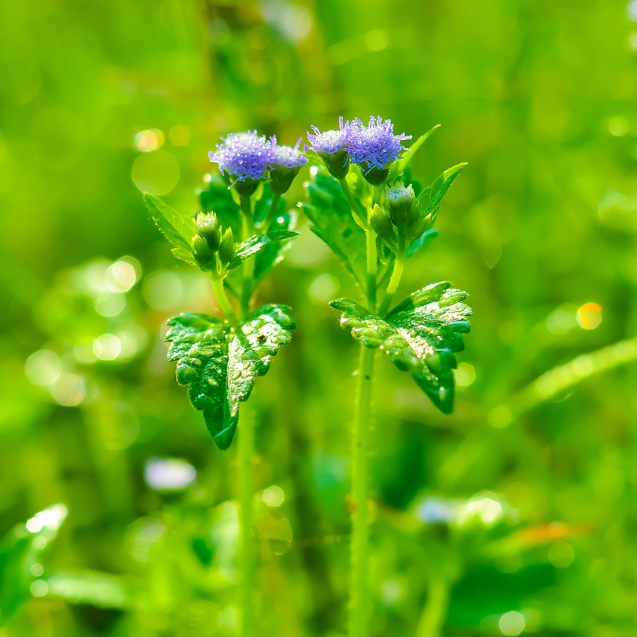 flower, green color, nature, beauty in nature, growth, plant, fragility, no people, day, focus on foreground, outdoors, freshness, grass, close-up, flower head
