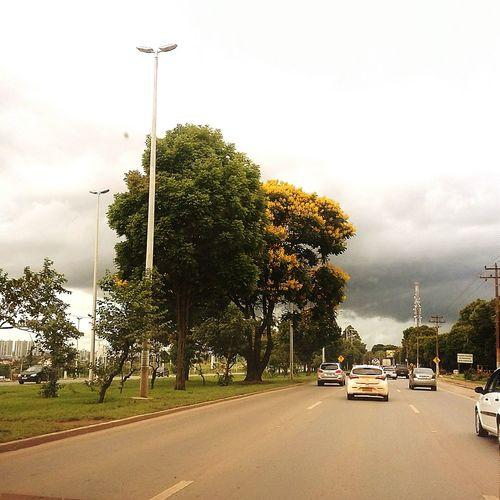 City View  Trees Streetphotography Vscocam EyeEm Best Edits Urban Life
