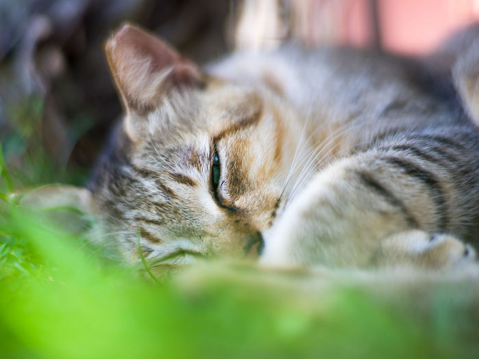 Close-up of cat sleeping on grasses, with one-eye half-opened. Animal Themes Cat Cute Dreaming Ear-tipped Eartippin Eyes Closed  Grasses Half-timbered Light And Shadow Lying Down One Animal One-eyed Pet Relaxation Resting Shades Of Grey Shadow Sleeping Spot Traveling Winter