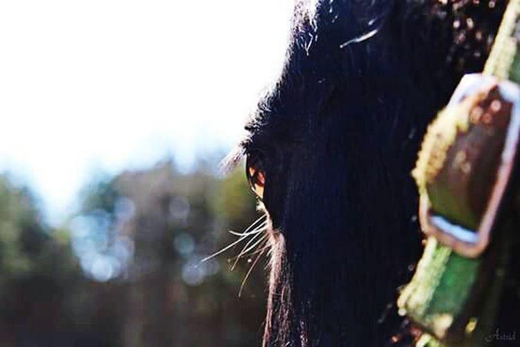Eye of horse Horse Details First Eyeem Photo