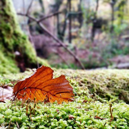 Autumn Leaves Autumn Leaves Enjoying Nature