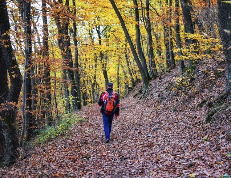 Walking in autumn forest Man People Travel Vocation Trip Enjoying Life Lifestyles person Tourism Outdoors Autumn Season  Change Countryside Autumn Collection Autumn Mood View Tree Men Full Length Forest Women Hiker Hiking Pole Walking Cane WoodLand Trail Tree Trunk Hiking Backpack