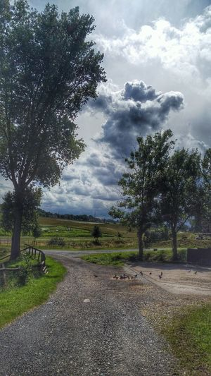 Baum Feld Vogel Wolken