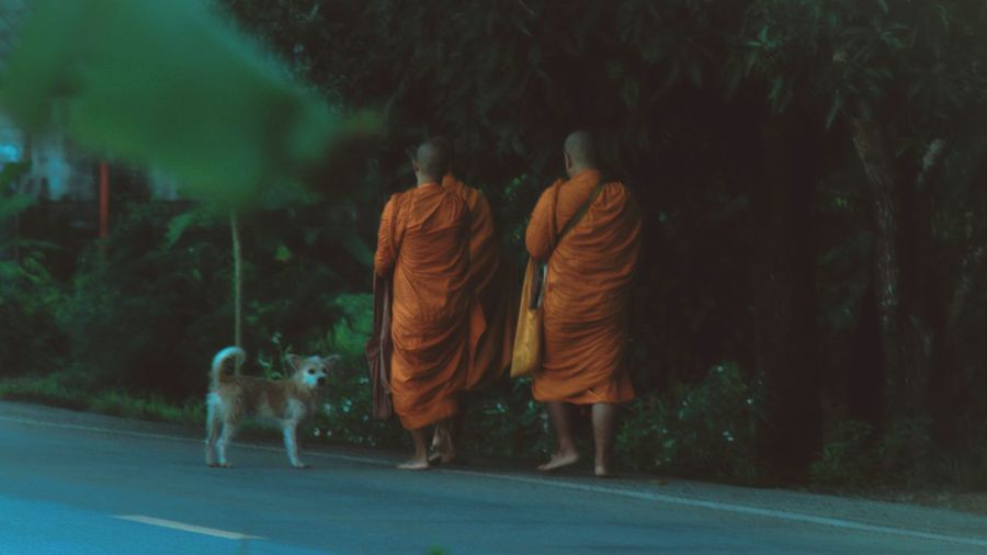 Rear view of monks walking on road by trees