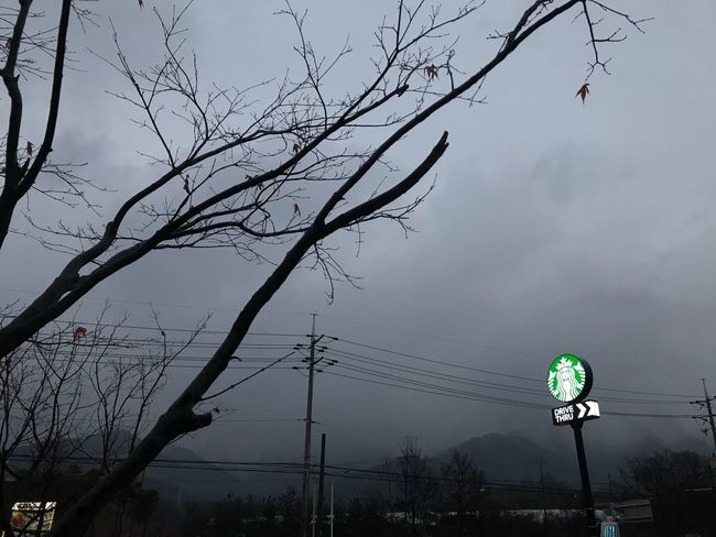 Ducso Starbucks Tree Communication Low Angle View Bare Tree Road Sign Branch