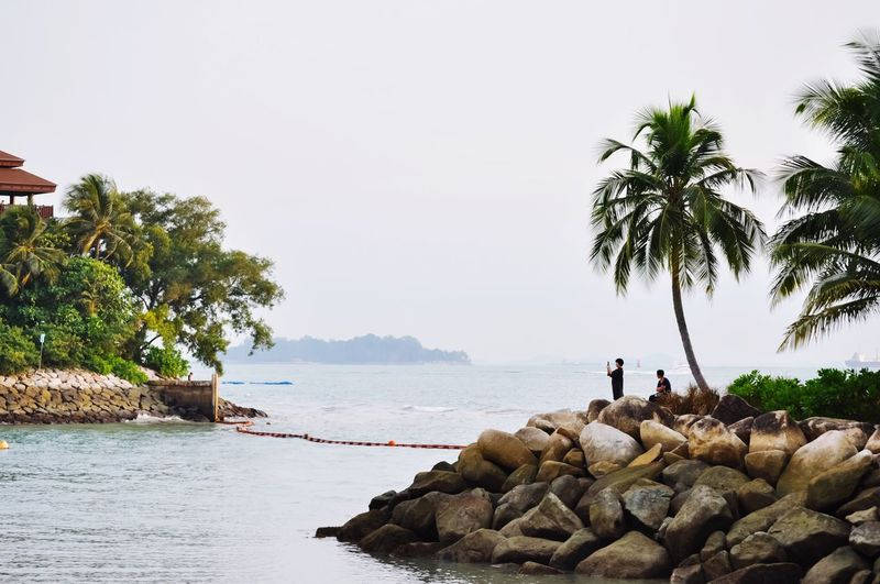 Palm Tree Rock - Object Tree Sea Nature Water Day Outdoors Vacations Leisure Activity Togetherness Two People Tranquil Scene Real People Rear View Tranquility Standing Men Beauty In Nature Beach Sentosa Sentosa Island, Singapore