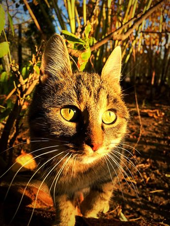One Animal Cat Animal Moments Nature Photography Photo Beautiful No People