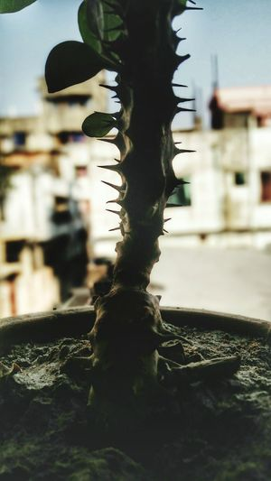 Check This Out Taking Photos Mobography Mobograph Redmi Note 2 Googlecamera Cactus