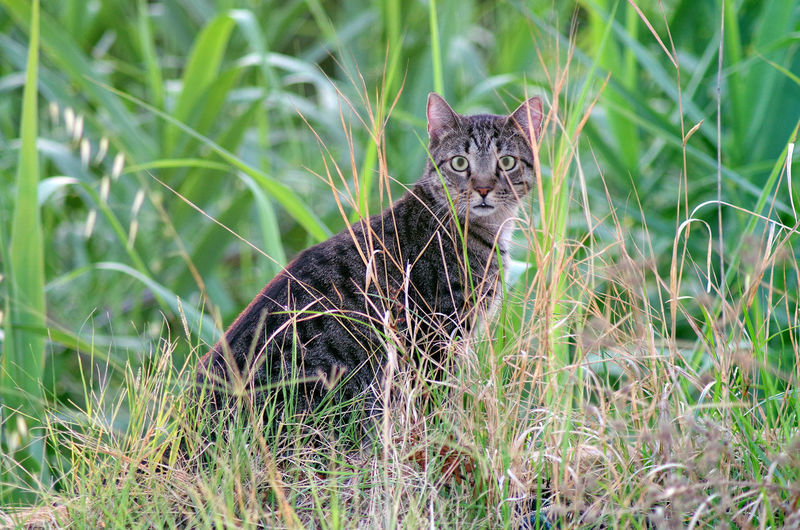 Portrait of a cat on grass
