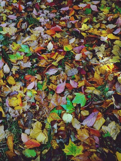 A carpet of colourful leaves Autumn Colors Textures And Surfaces Nature_collection Eyeemnaturelover