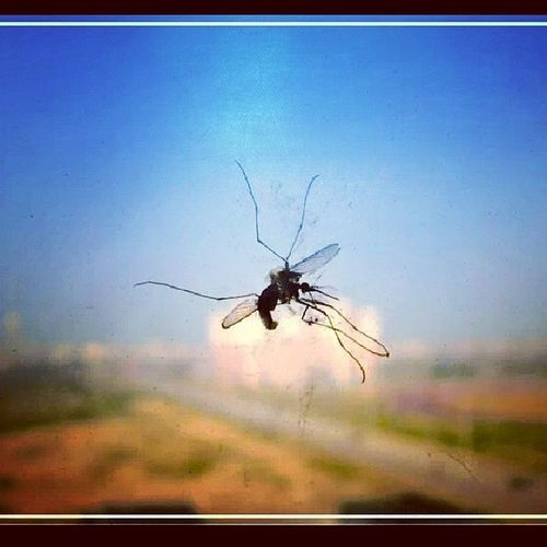 Mosquito Oldpik Instapic Insect Natgeopictures Abstract Flyingmachine