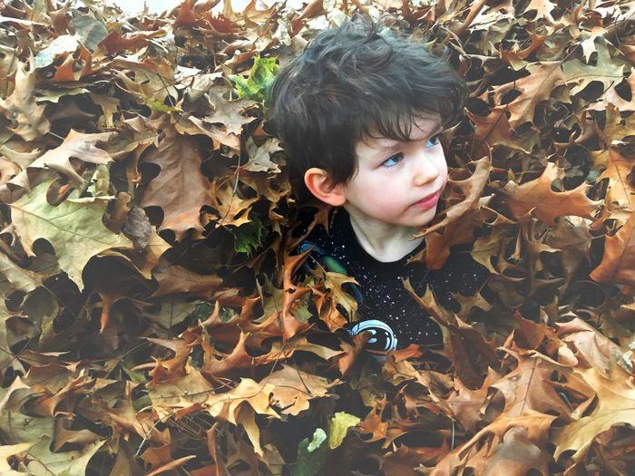 Cute boy amidst autumn leaves