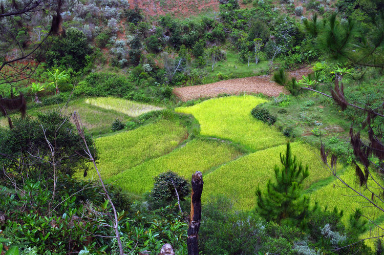 Anjozorobe Backpacking Field Forest Grass Green Color Growth High Angle View Hill Landscape Madagascar  Madagascar Nature Nature No People Outdoors Plant Rice Field Scenics Terraced Field Tranquil Scene Tranquility Travel Tree Trekking