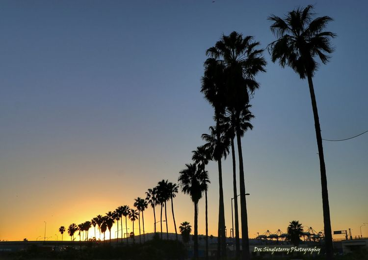 Palm trees by sea against sky during sunset