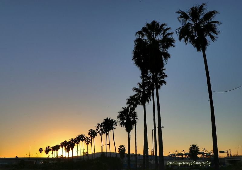 Height Line Towards The Sunset Palm Tree Sunset Nature Outdoors Palm Trees Sunsets Beauty In Nature Landscapes Golden Hour Beauty Scenery From My Point Of View Scenics Trees ForTheLoveOfPhotography Landscape