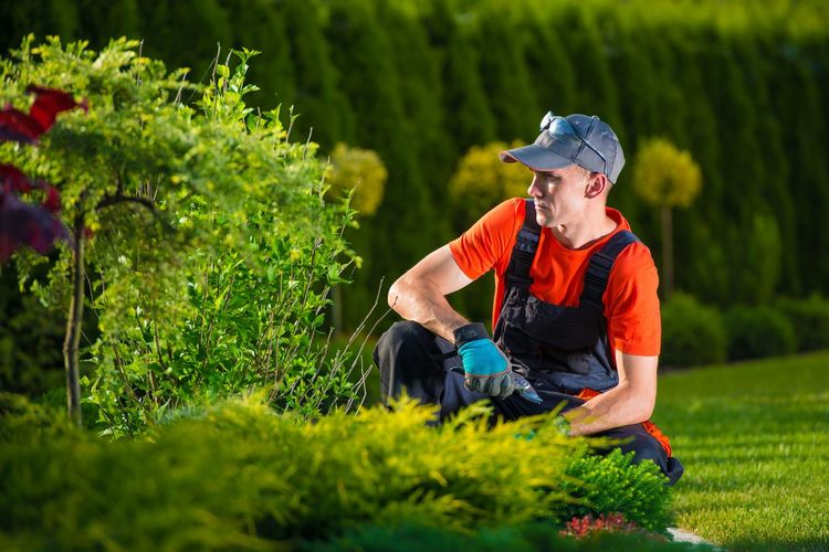 Male worker gardening at park