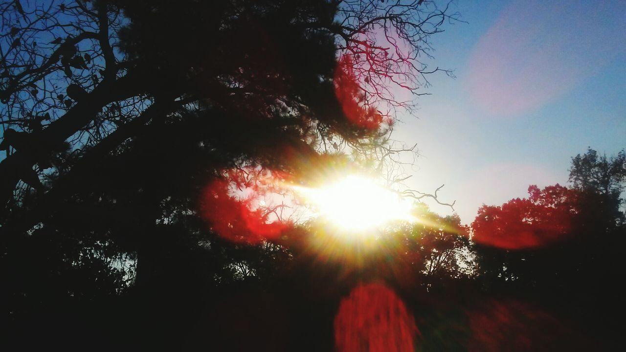 tree, sun, sunbeam, low angle view, nature, beauty in nature, sunlight, red, sky, outdoors, growth, sunset, tranquil scene, tranquility, no people, silhouette, scenics, day, branch, close-up