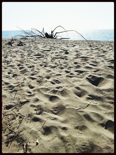 giant spider on the Beach On The Beach Beach Life