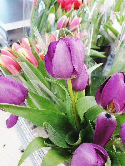 tulips Tulips
