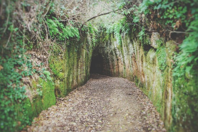 Etruscan Pathway Defence Narrow Passage Narrow Path Rocks Tuffi  Greenery Where Are You Going ? Italy Tuscany Landscape Landscapes With WhiteWall Tuff