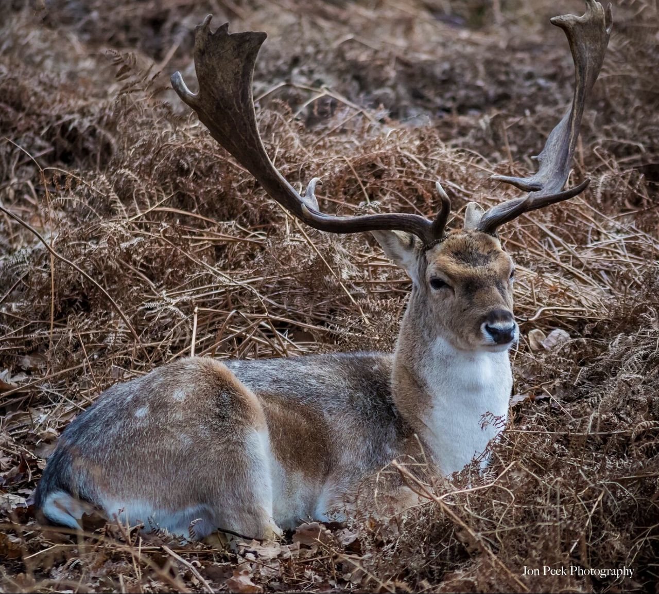 animals in the wild, animal themes, one animal, antler, animal wildlife, deer, mammal, no people, outdoors, day, stag, relaxation, nature