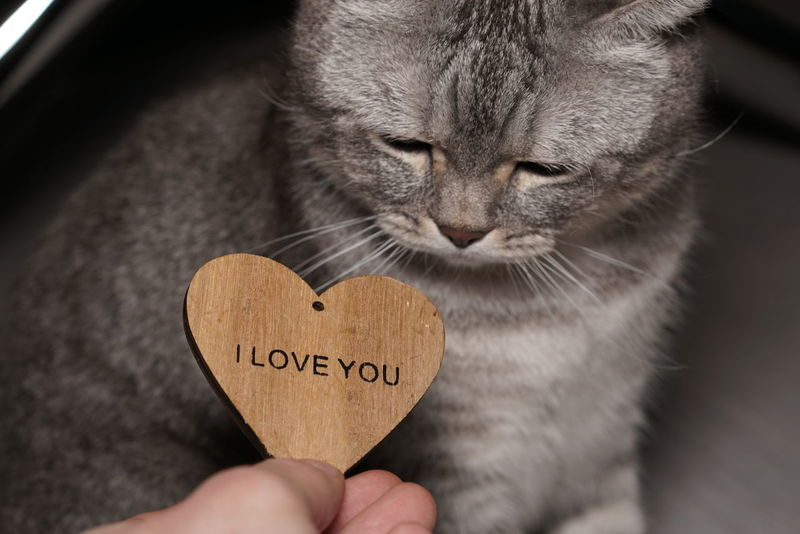 Adult Animal Themes Close-up Day Domestic Cat Feline Heart Shape Holding Human Hand Indoors  Love One Animal One Person People Pets