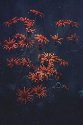 Orange flowers blooming at park during night