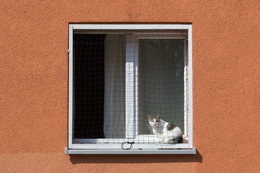 Domestic cat sitting on a window sill enjoying the sun City Sunlight Sunny Textured  Animal Animal Themes Architecture Building Exterior Building Feature Concrete Domestic Animals Domestic Cat Full Frame Geometric Shape Looking Up Mammal One Animal Orange Color Outdoors Pets Square Shape Sunbathing Window Window Frame Window Sill