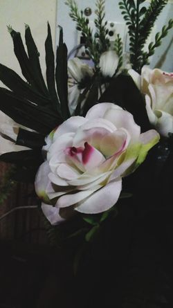 The Still Life Photographer - 2018 EyeEm Awards Flower Head Flower Petal Black Background Close-up Plant Plant Life Softness