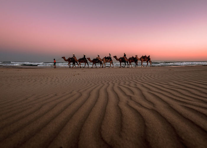 People riding camels at beach against sky