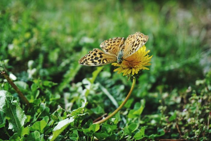Butterfly Garden Photography Nektar Flower Eating Healthy Low Angle View Taking Pictures