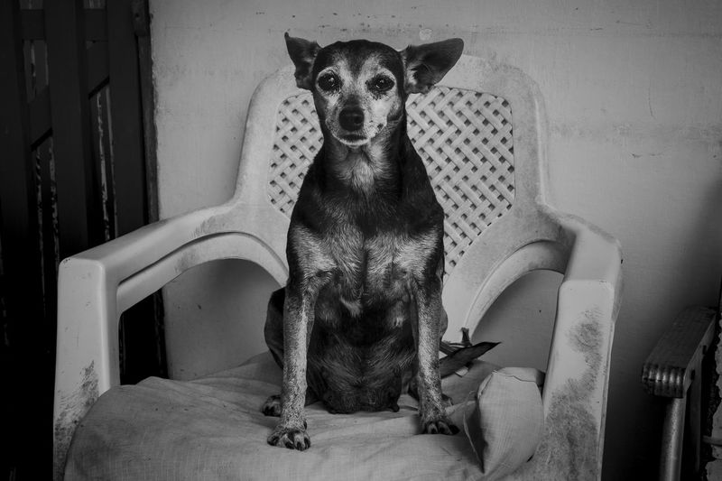 Portrait of dog sitting at home