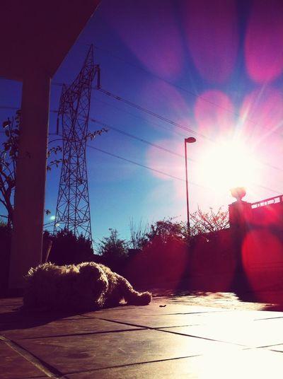 Sol Fotographia Foto Fotografia Dog Perro València Torrente